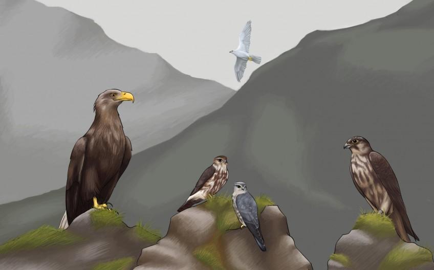 Five birds of prey